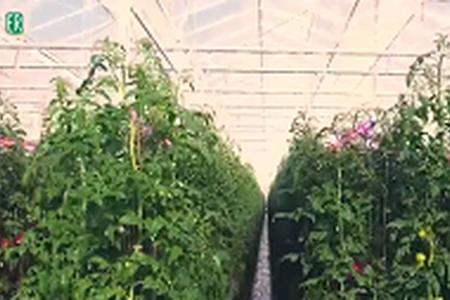 IntERvallo 27 - La green economy è il nostro futuro